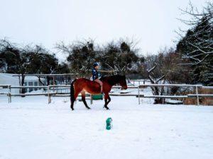 Koń zima ferie